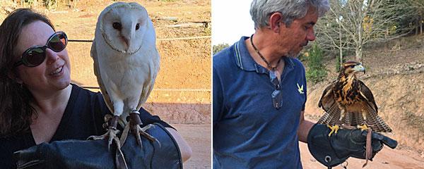 O que fazer em Monte Verde: Escola Mineira de Falcoaria